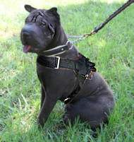Sharpei Nylon multi-purpose dog harness pulling Chinese Shar-Pei