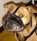 Gorgeous Snoop wearing our Wire Basket Dog Muzzles Size Chart - M4light