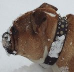 Cool Dog loves 20%Discount - 3 Rows Leather Spiked and Studded Dog Collar -S55