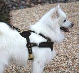 American Eskimo Dog Tracking / Pulling / Agitation Training Leather Dog Harness - H5