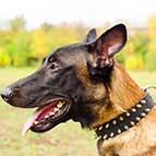 Leather Spiked Belgian Malinois Collar