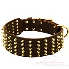 Fantastic Wide Leather Collar with Brass Spikes and Hardware