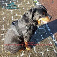 *Sunny Loves His Rottweiler Dog Harness of Practical Nylon Material