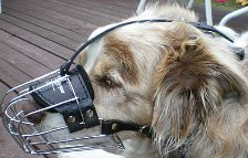 *Sydney got new Basket Dog Muzzles (All Sizes)
