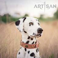 *Lio Dalmatian on a Walk Wearing Artisan Design Tan Leather Dog Collar