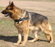 Tracking/Pulling Leather Dog Harness-German shepherd harness