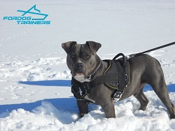 *Argos in Nylon Dog Harness for Pulling Tracking and Training - Pitbull Harness