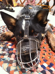 Lightweight Wire Basket Blue Heeler Muzzle for Upgraded Dog Comfort