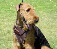 Walking Leather Dog Harness-Airedale Terrier harness