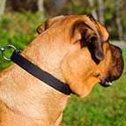 NEW High Quality Adjustable Nylon Cane Corso Collar