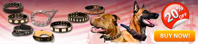 Multipurpose Dog