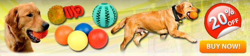 Training Dog Toys for Active