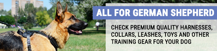 Check Premium Quality Harnesses, Collars, Leashes, Toys and Other Training Gear for Your Dog!