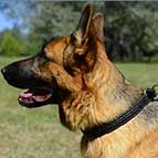 Gorgeous Wide 2 Ply Leather Choke German Shepherd Collar - Fashion Exclusive Design