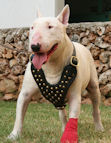 Studded Walking dog harness made of leather And Created To Fit Bull Terrier and similar breeds - product code H15