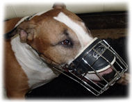 Bull Terrier Good Fit Comfort Cage Dog Muzzle - M9