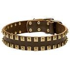 "New leather dog collar - Fashion Exclusive Design - ""Caterpillar"""