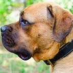 Royal Nappa Hand Made Leather Cane Corso Collar