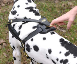 leather dog harness for walking and training your dog