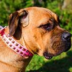 Exclusive Pink Leather Cane Corso Collar with Brass Studs