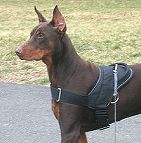 All Weather Nylon dog harness for tracking / walking Designed to fit Doberman - H6_1