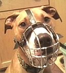 Sizing Chart for M4 Wire Basket Canine Muzzle