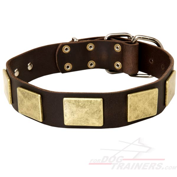 Decorated Cane Corso Collar Leather with Massive Plates