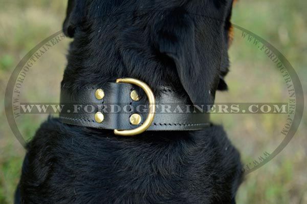 Brass hardware on dog collar