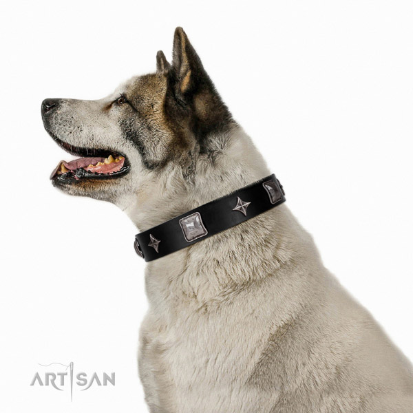 Extraordinary walking black leather Akita Inu collar with chic decorations