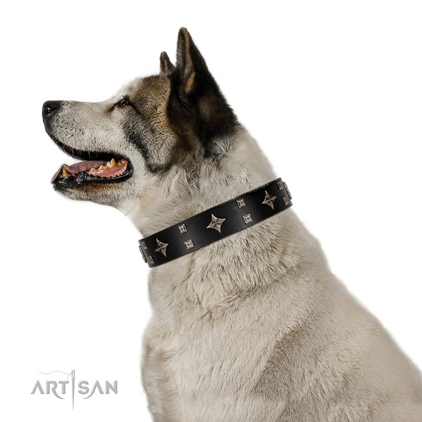 Black leather Akita Inu collar with silver-like covered decorative elements