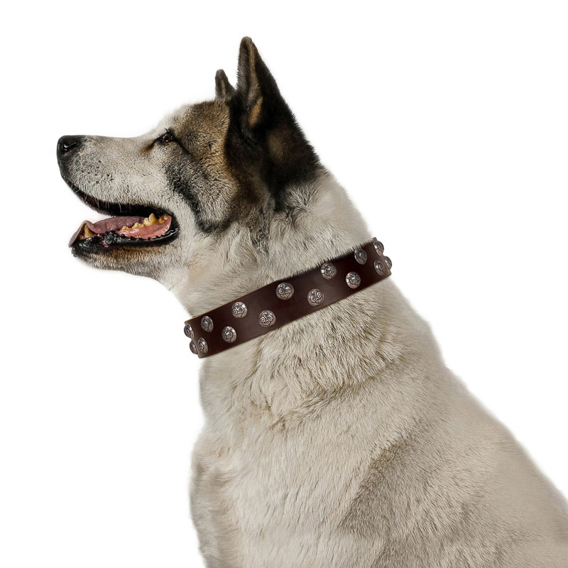 FDT Artisan brown leather Akita Inu collar with studs