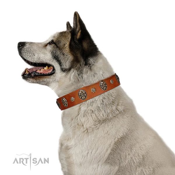 Comfortable leather Akita Inu collar for everyday use