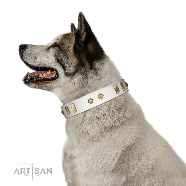 Natural Leather Akita Inu Collar with Incredible