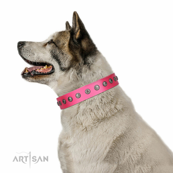 Decorated leather Akita Inu collar for comfortable walking