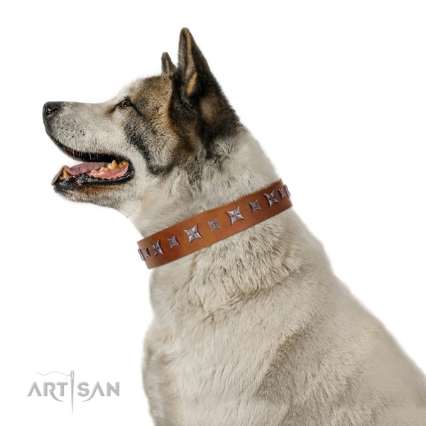 Walking top-notch quality walking leather Akita Inu collar