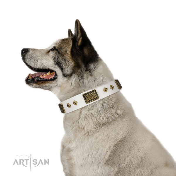 Akita Inu stylish walking dog collar of awesome quality genuine leather