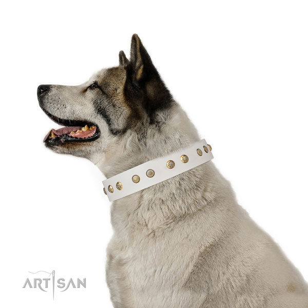 Akita Inu everyday use dog collar of exceptional quality genuine leather
