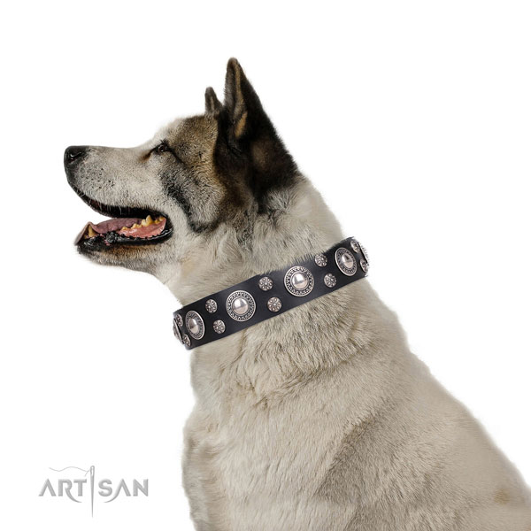 Akita Inu exquisite full grain leather dog collar with adornments
