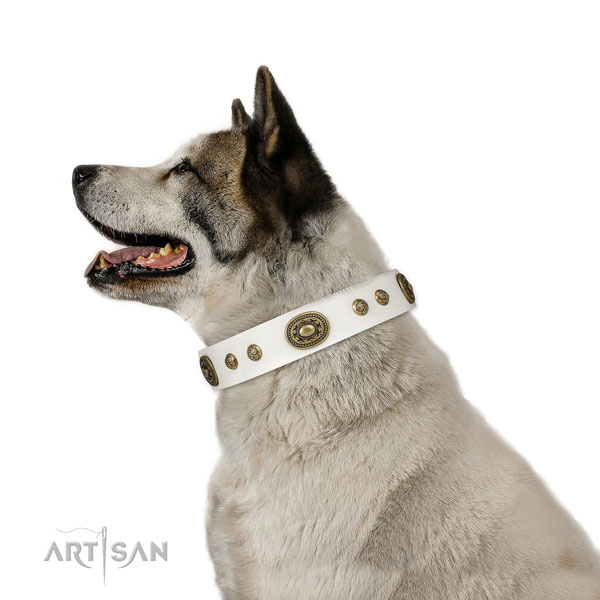 Akita Inu stylish walking dog collar of exquisite quality genuine leather
