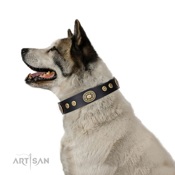Akita Inu extraordinary genuine leather dog collar with adornments