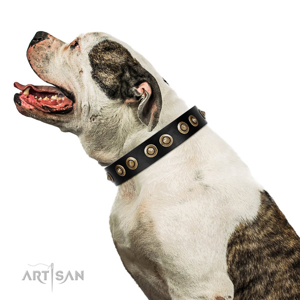 Genuine Leather American Bulldog Collar with Riveted Decorations