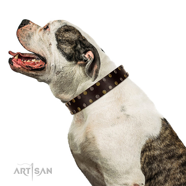 Decorated leather American Bulldog collar for comfortable walking