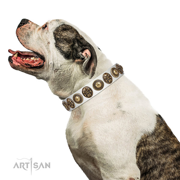 White Leather American Bulldog Collar with Extraordinary Decorations