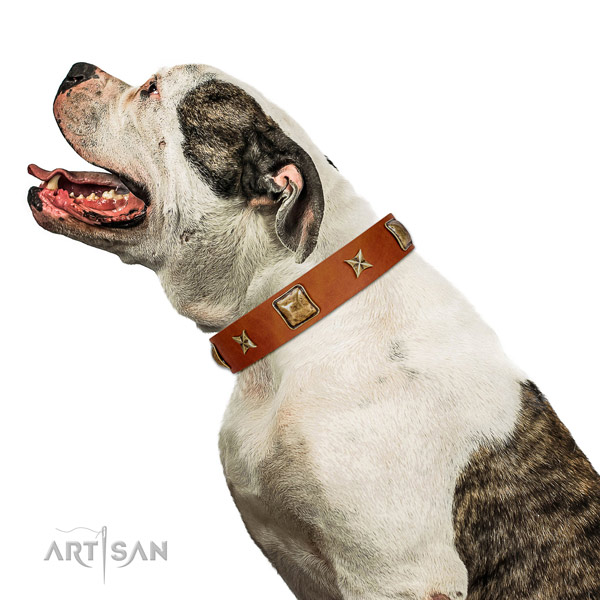 Safe tan leather American Bulldog collar for walking