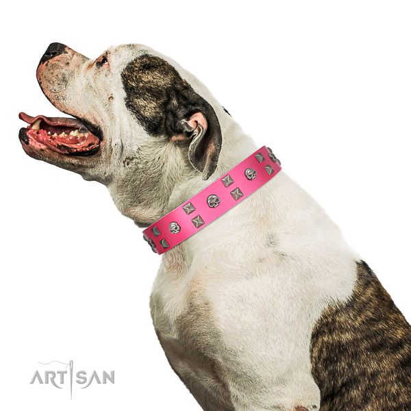 Extraordinary walking pink leather American Bulldog collar with chic decorations