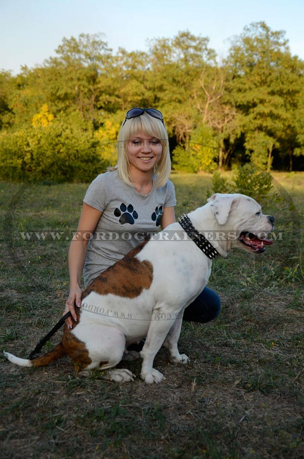 American Bulldog wearing Perfect Leather Dog Collar