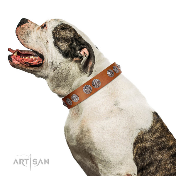 Adjustable full grain natural leather American Bulldog collar with circular plates
