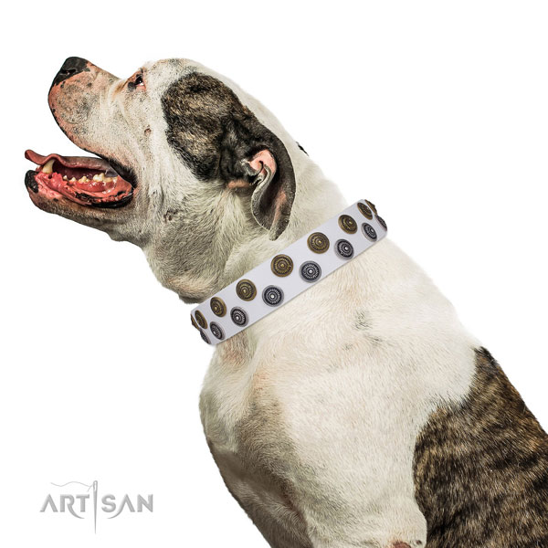 American Bulldog easy wearing full grain leather dog collar with adornments
