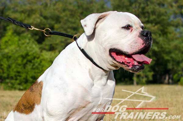 Comfortable Leather Choke Collar for American Bulldog Obedience Training