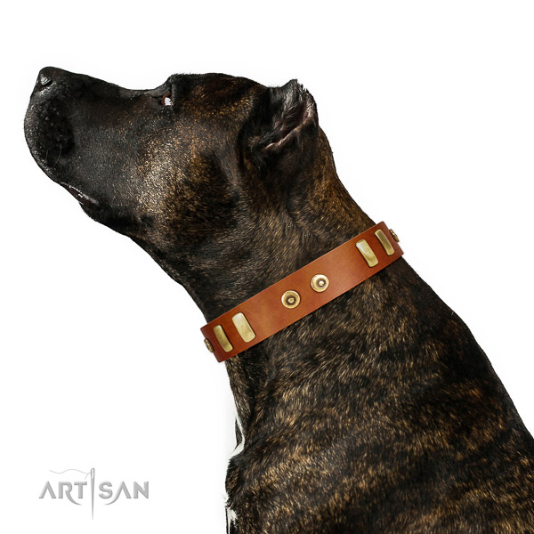 Time-proof Amstaff leather collar for daily walking in style